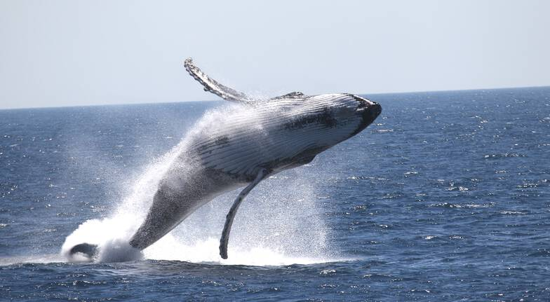 Whale Watching Cruise and Aquarium Experience - Weekend