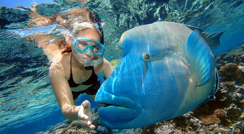 Raging Thunder Adventures woman snorkelling fitzroy island big colourful blue grouper fish