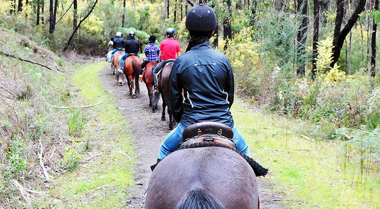 Bunyip State Park Bush Horse Ride - 2 Hours