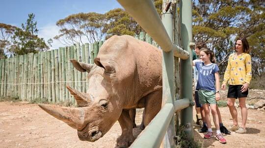 Rhino Encounter at Monarto Safari Park