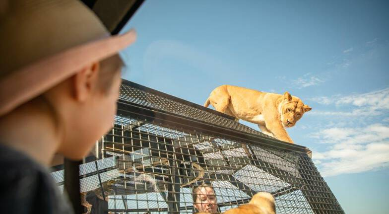 Lions 360 Experience with Safari Park Entry