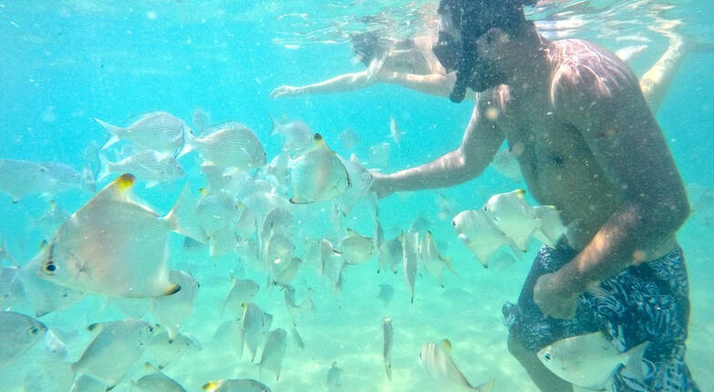 Kayaking and Snorkelling Tour Seaway Kayaking Tours snorkelling with tropical fish