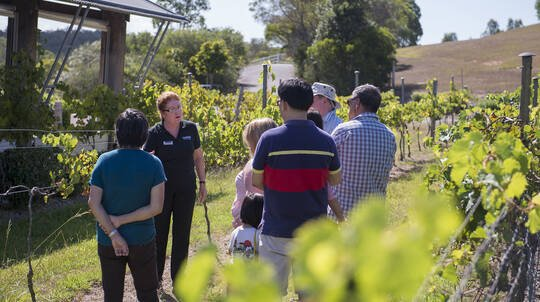 Mount Cotton Winery Tour and Tasting Session - For 2