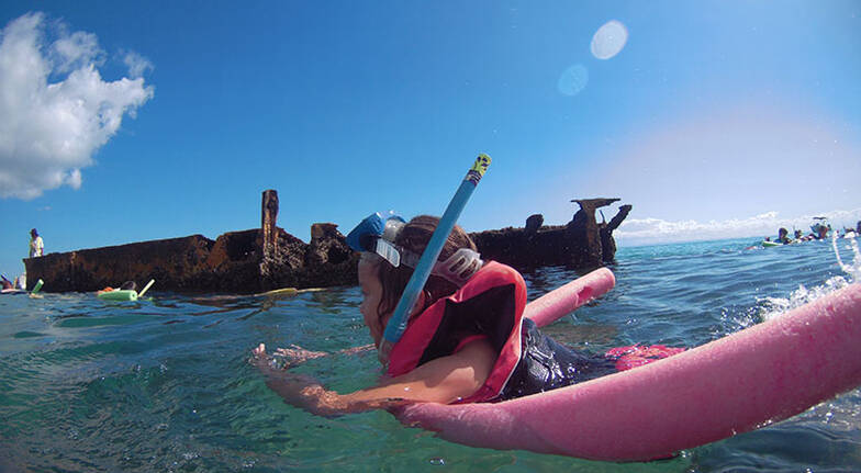 Dolphin Cruise to the Tangalooma Wrecks with Transfers