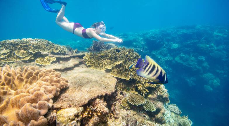Cruise and Helmet Diving at the Great Barrier Reef