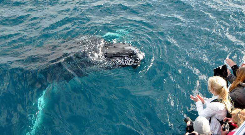 Seasonal Whale Watching Cruise in Sunshine Coast