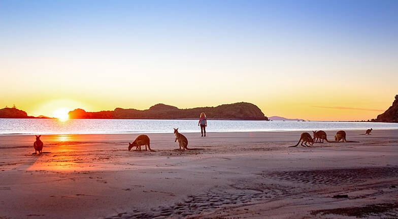 Kangaroos on the Beach at Sunrise and Wildlife Tour