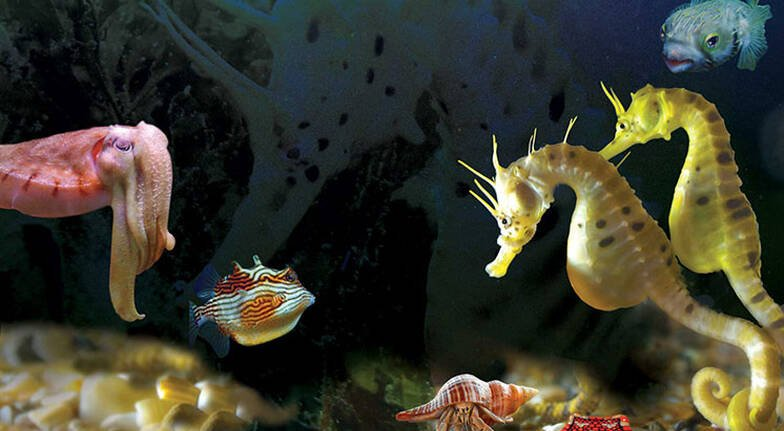 Guided Tour of Seahorse World - 45 Minutes