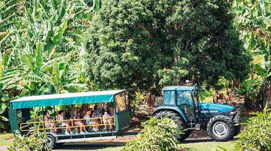 Tropical Fruit World Farm Tour - 2 Hours