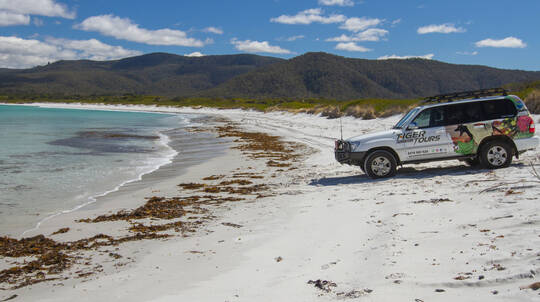 Tasmania Coastal Mountain 4WD Tour - Half Day