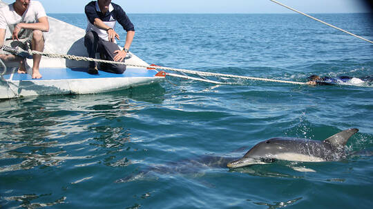 Dolphin Watching - 4 Hour Cruise