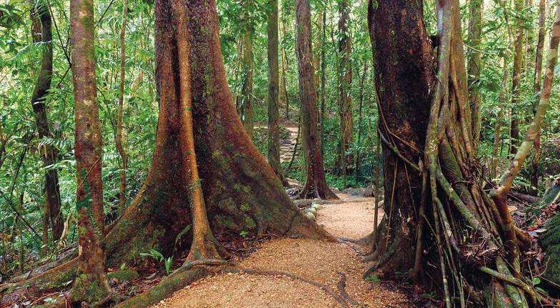 Full Day Sunshine Coast Hinterland Tour with Lunch