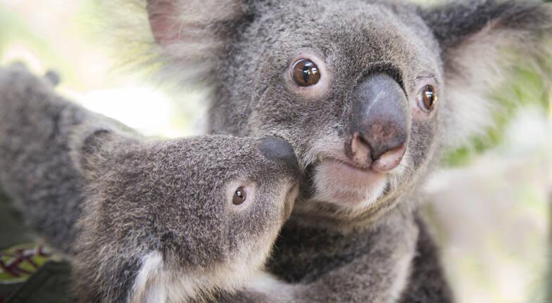 Rainforest, Aboriginal Culture and Wildlife Tour - Family