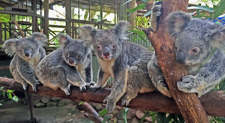 Kuranda Aboriginal Culture and Wildlife Tour - Adult