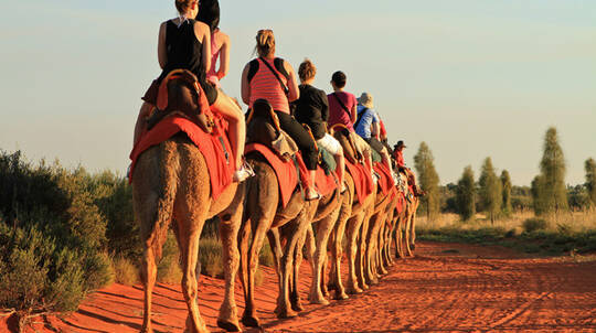Sunset Camel Ride - 60 Minutes