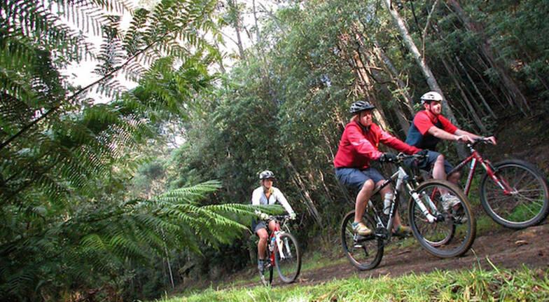Mount Wellington Descent Cycling Tour