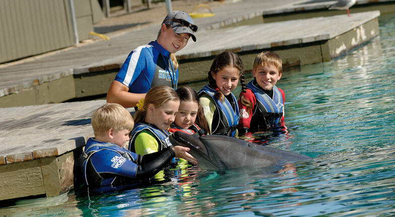 children swimming with dolphins at sea world gold coast