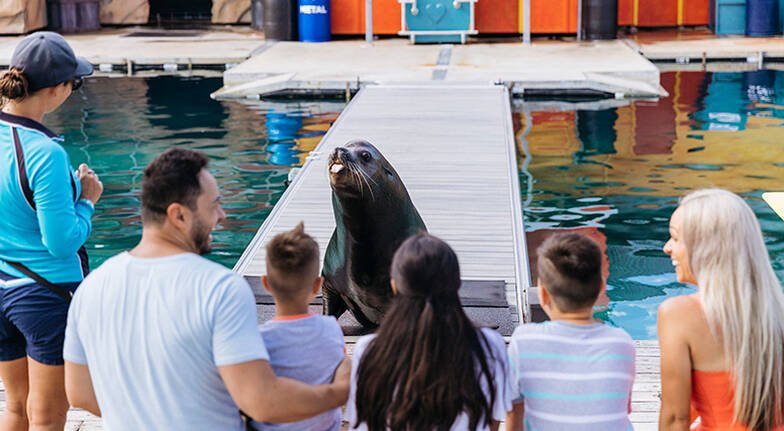 Seal Encounter at Sea World with Photograph