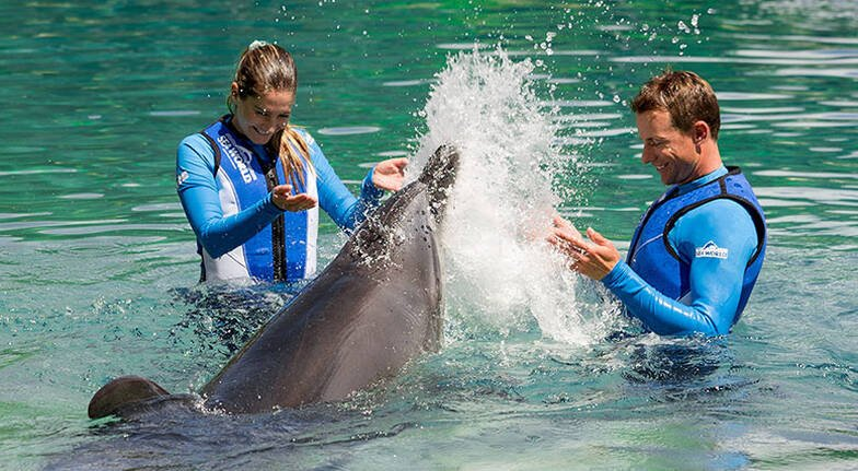 Private Dolphin Encounter at Sea World  45 Minutes  For 2