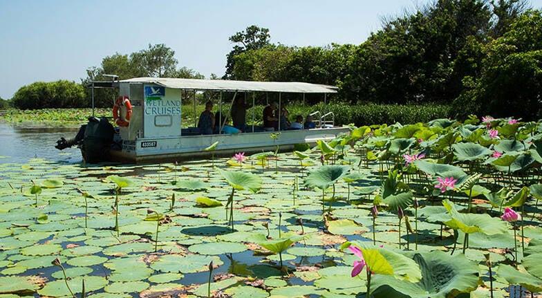 Wetland Wildlife Cruise - 1.5 Hours