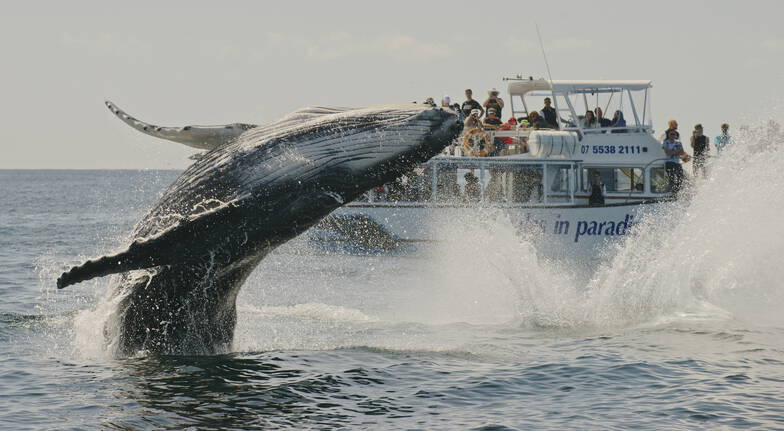 Whale Watching Cruise - Surfers Paradise