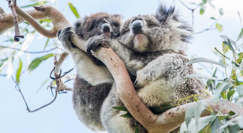Melbourne to Adelaide Sightseeing Tour - 2 Days