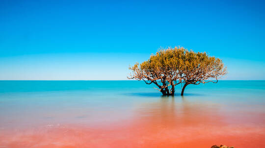 Broome Discovery Tour with Pearling Master's High Tea