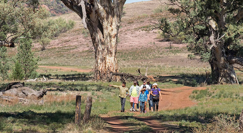 Aboriginal Cultural Walk to Old Wilpena Station  2 Hours