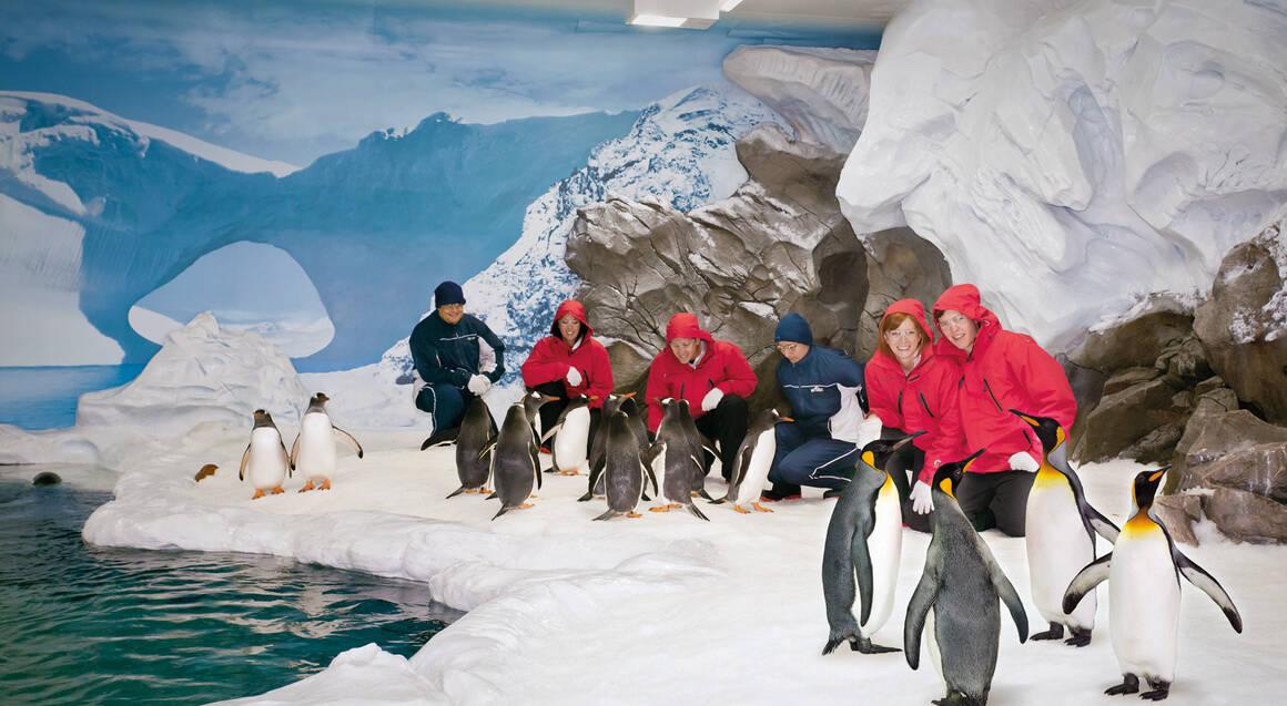 Penguin Antarctic Adventure at Sea World