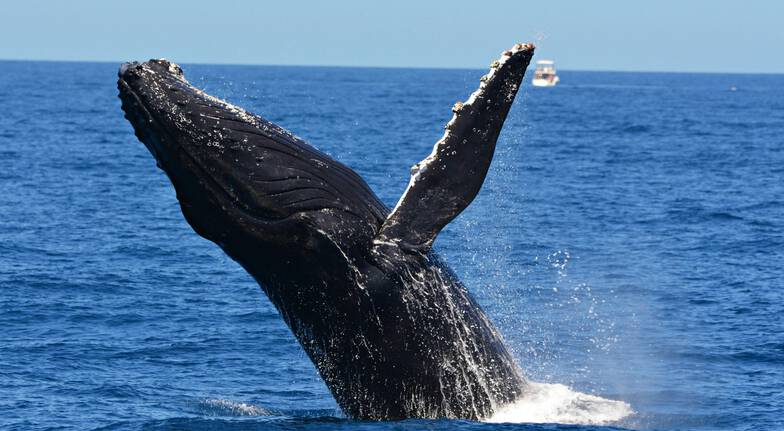 Whale Watching Cruise - Fremantle and Perth