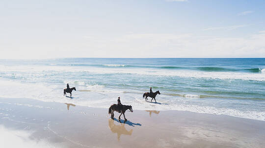 Byron Bay Forest to Beach Horse Trail Ride - 2 Hours
