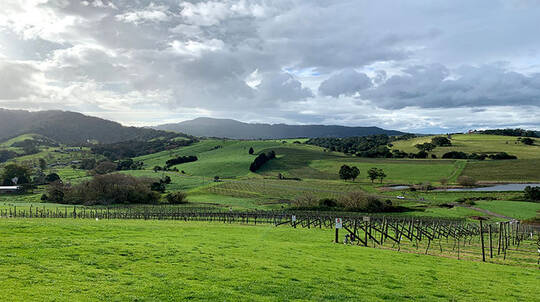 South Coast Private Winery Tour with Tastings - For 2
