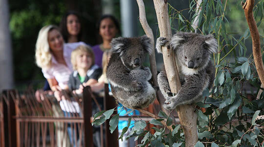 Early Morning Guided Tour of Melbourne Zoo - 45 Minutes