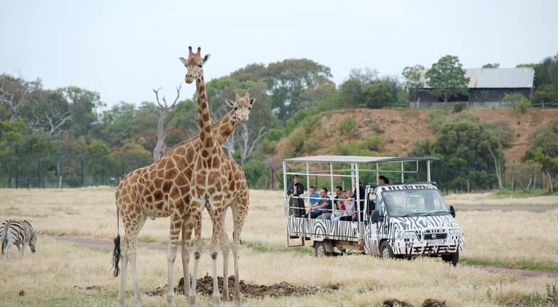 Off Road Safari at Werribee Open Range Zoo