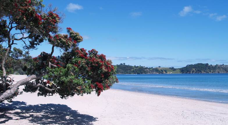 Waiheke Island Winery Tour and Lunch - For 2