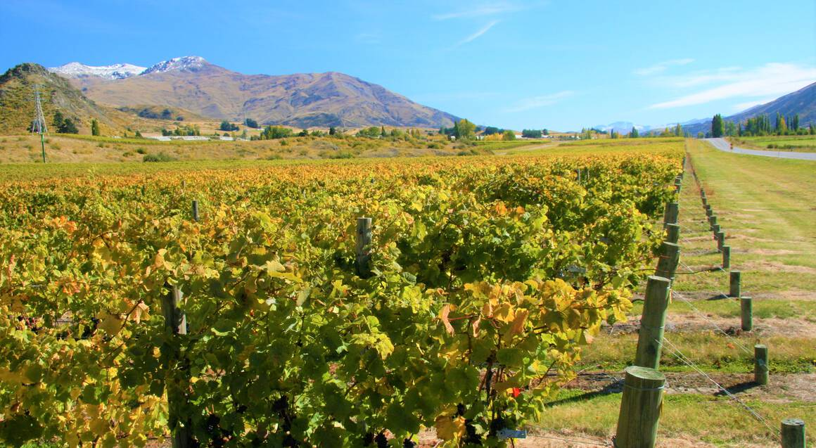 Gibbston Valley Wine Tour with Jet Boating on Kawarau River