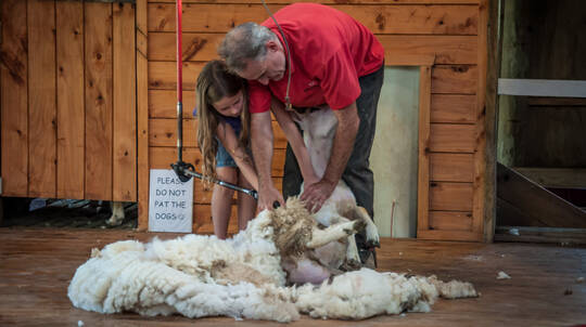 Sheepworld Farm Admission with Transfers