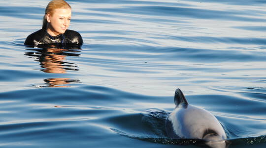 Swim with Hector's Dolphins in Akaroa Harbour
