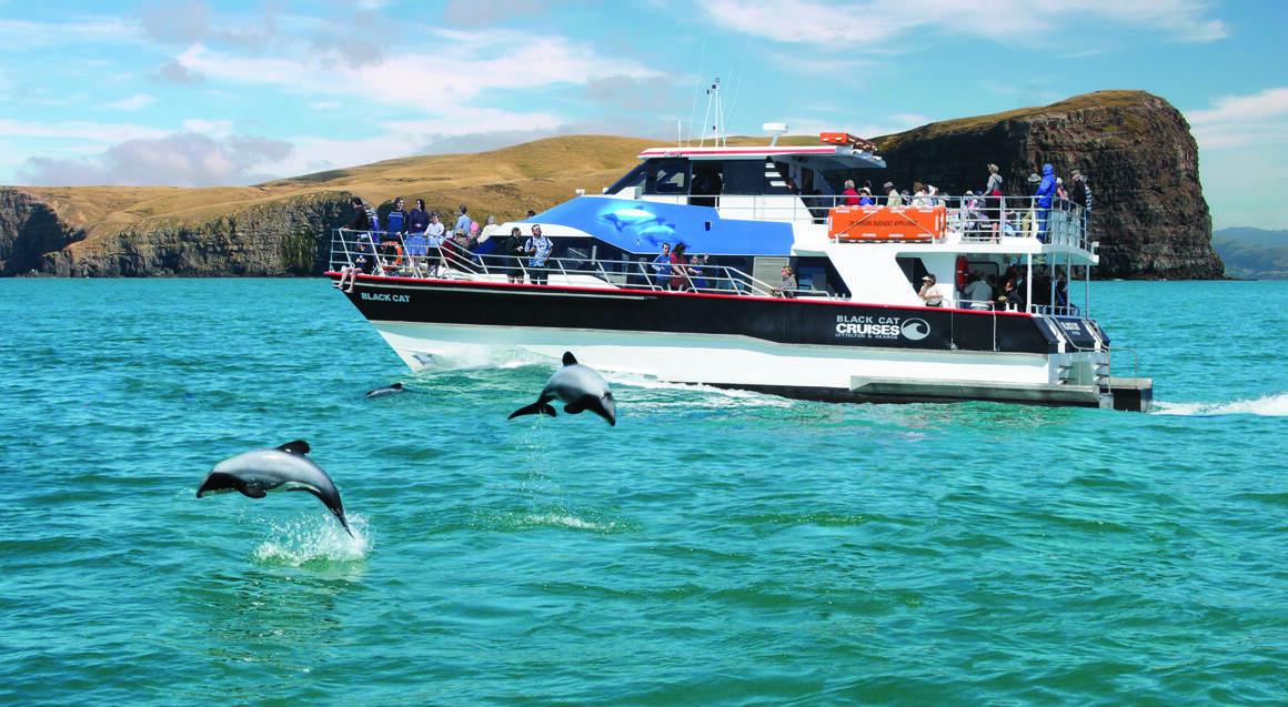 Nature Cruise at Akaroa Harbour