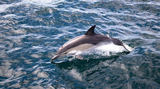 Bay of Plenty Dolphin and Wildlife Cruise - Half Day