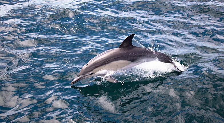 Bay of Plenty Dolphin and Wildlife Cruise - Half Day