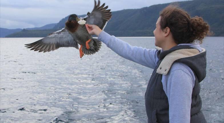Scenic Cruise on Lake Taupo