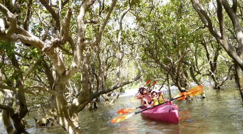 kayak on river through trees