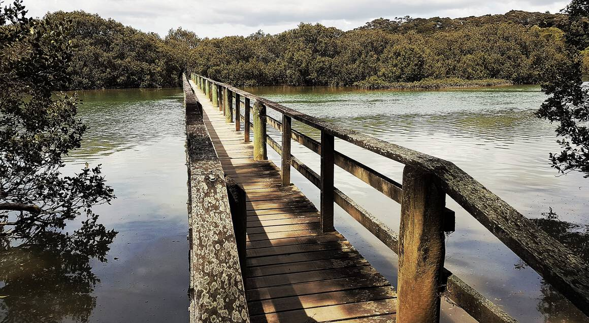 board walk over a river with mangroves