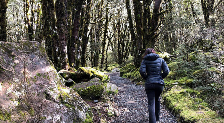 Full Day Tranzalpine Train and Hike in Arthur Pass Tour