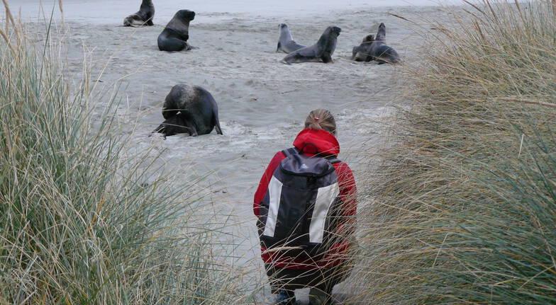 Otago Peninsula Wildlife Encounter Tour