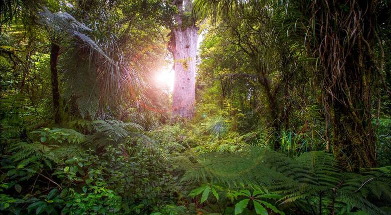 Waipoua Forest Daylight Tour - Adult