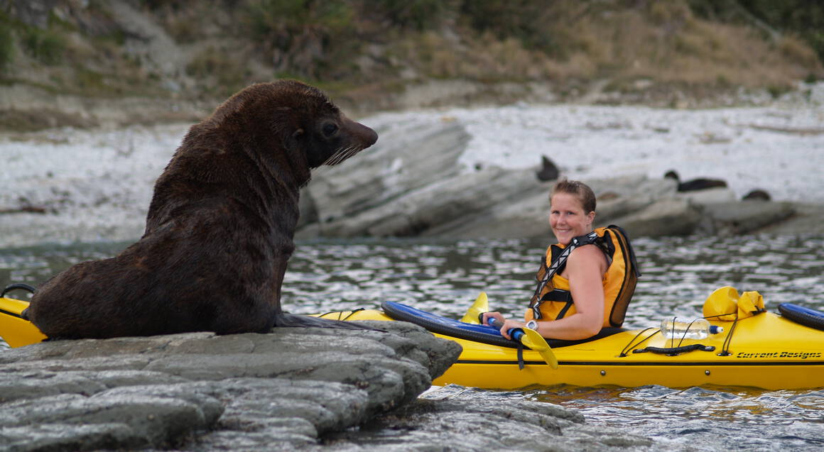 Sea Kayak with Fur Seals - For 2