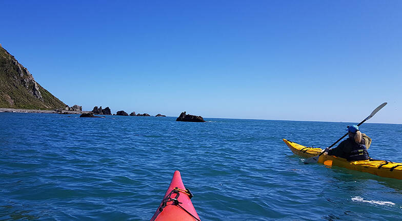 Kapiti Island Visit and Guided Kayaking Tour  Half Day