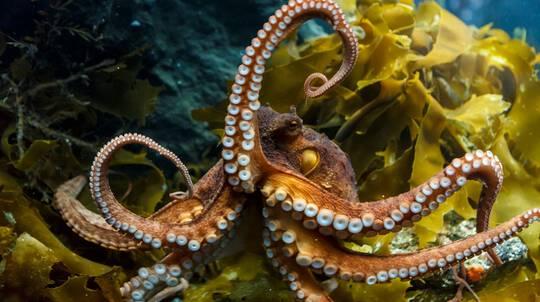 Kelly Tarlton's SEA LIFE Aquarium Entry